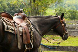 5 powodów, dlaczego warto jeździć konno