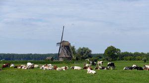 Chcesz założyć własne gospodarstwo rolne Zobacz, od czego zacząć!