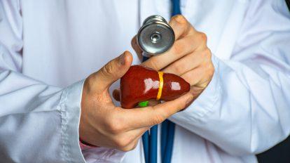 Encefalopatia wątrobowa - lekarz trzymający w rękach model wątroby.